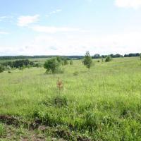 Так выглядит часть центрального поля в Любижской части. Конец мая 2010г.